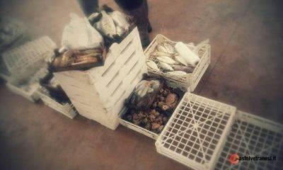 Asta del pesce Incanto del pesce Marinella di Selinunte Sapori di Sicilia Tradizioni locali 2
