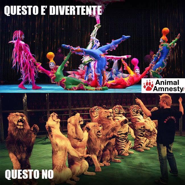 """ENPA Castelvetrano: """"Boicottare ilcircocon animali"""""""
