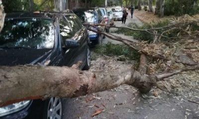 Cede grosso ramo, tragedia sfiorata a Castelvetrano