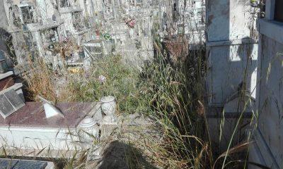 """Il cimitero di Castelvetrano """"sepolto"""" dalle erbacce"""