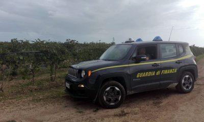 Guardia di Finanza scopre 12 lavoratori in nero, 6 a Castelvetrano 1